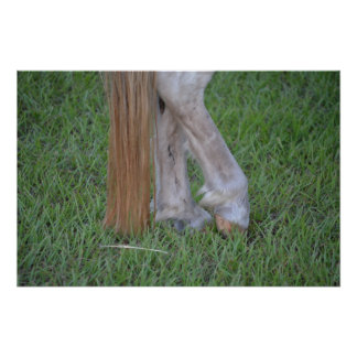 horse equine hind hooves one resting tail posters