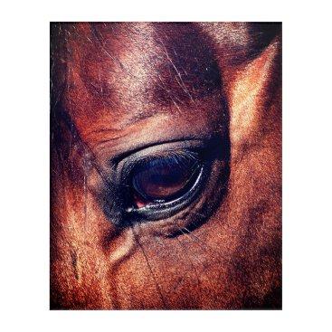 anakondasp horse eye acrylic print