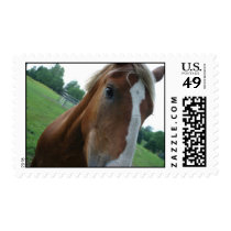 Horse eye close up postage stamps retail item