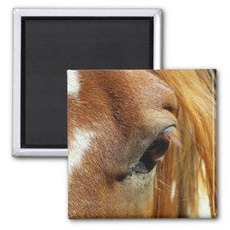Horse Eye Closeup Magnet
