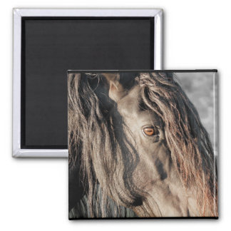 Horse Eye Refrigerator Magnets