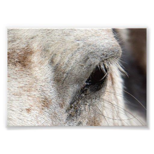 Horse Eye Photo Print