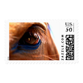 Horse Eye Postage