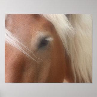 Horse Eye Wisdom Poster