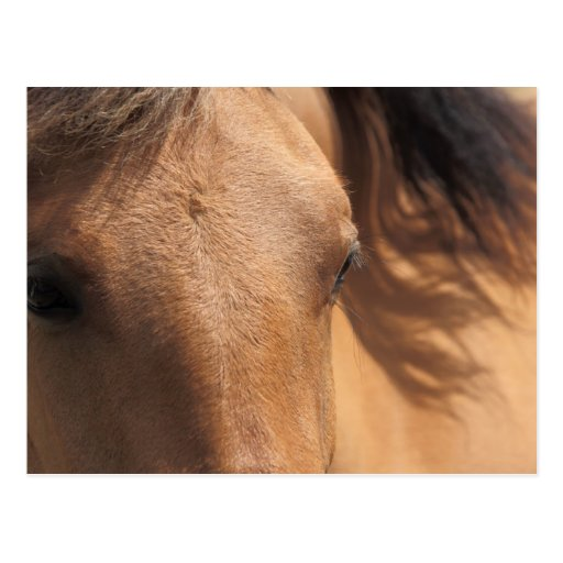 Horse Eyes Post Cards