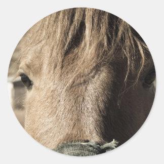 Horse Face Classic Round Sticker