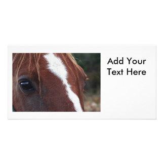 Horse Face Closeup Photo Greeting Card