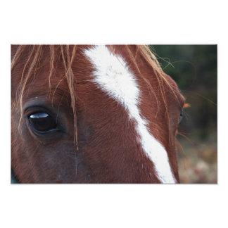 Horse Face Closeup Photo