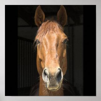 Horse Face Photograph Poster