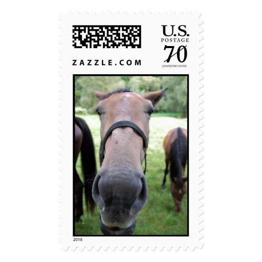 Horse face postage stamp