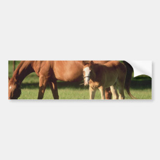 Horse Family  Bumper Stickers