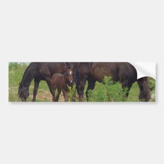 Horse Family Grazing Bumper Stickers