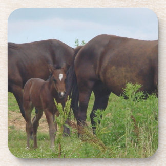 Horse Family Grazing  Cork Coasters