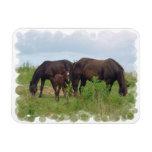 Horse Family Grazing  Premium Magnet  Vinyl Magnet