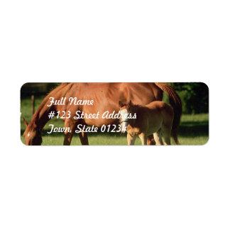 Horse Family Return Address Mailing Labels