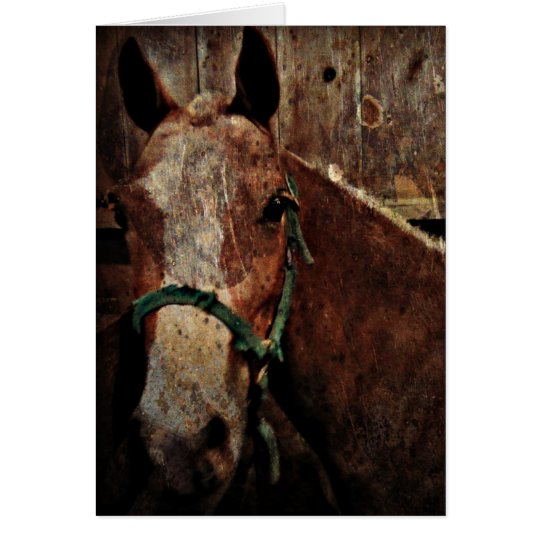 Horse, Father's Day Card