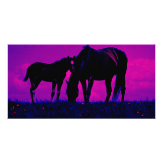 Horse & Filly Photo Card