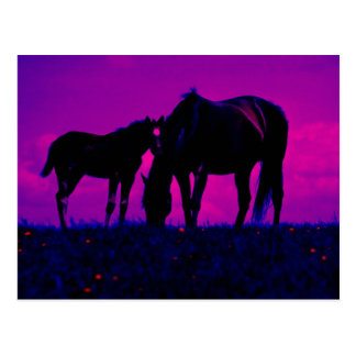 Horse & Filly Postcard