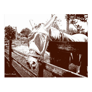 horse fly mask over fence brown white sketch postcard