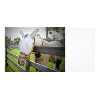 horse fly mask over fence pasture image photo card