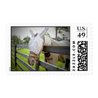 horse fly mask over fence pasture image postage stamp