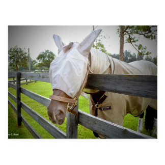 horse fly mask over fence pasture image postcard