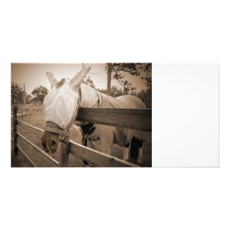 horse fly mask over fence sepia photo card