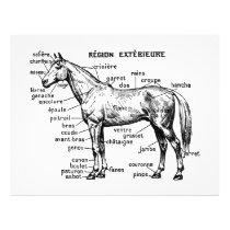 Horse Flyer