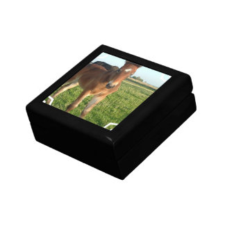 Horse Foal Gift Box