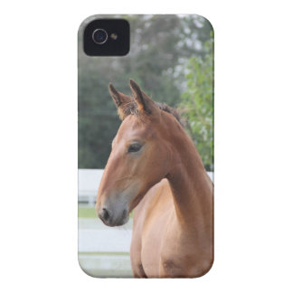 Horse/foal iPhone 4 Cover