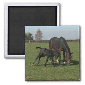 Horse & Foal Magnet