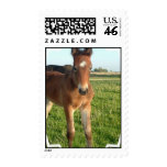 Horse Foal Postage Stamp