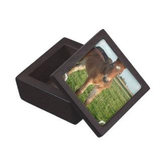 Horse Foal Premium Gift Box