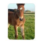 Horse Foal Premium Magnet Flexible Magnets