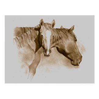HORSE, FOAL: SEPIA: PENCIL ART POSTCARD