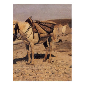 Horse for the stones collecting in the Vela Postcard