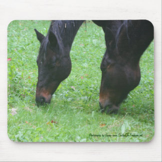 Horse Friends Grazing Photo Mousepad