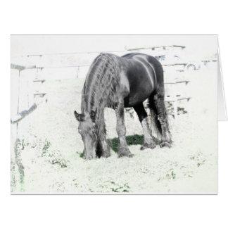 Horse Friesian Stallion Animal Nature Black white Card