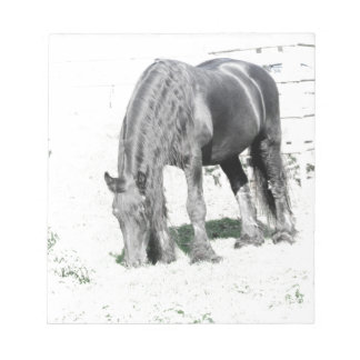 Horse Friesian Stallion Animal Nature Black white Memo Note Pads
