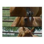 Horse Fun Postcards