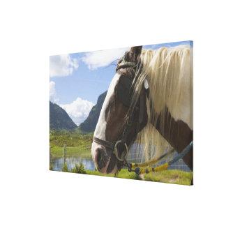 Horse, Gap of Dunloe, County Kerry, Ireland Canvas Print