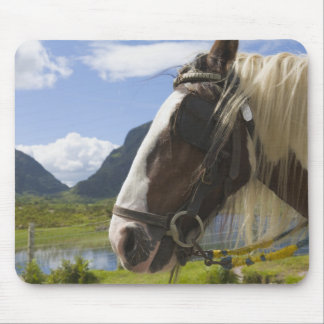 Horse, Gap of Dunloe, County Kerry, Ireland Mouse Pad