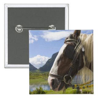 Horse, Gap of Dunloe, County Kerry, Ireland Pinback Button