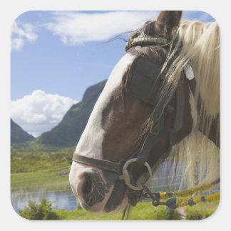 Horse, Gap of Dunloe, County Kerry, Ireland Square Sticker