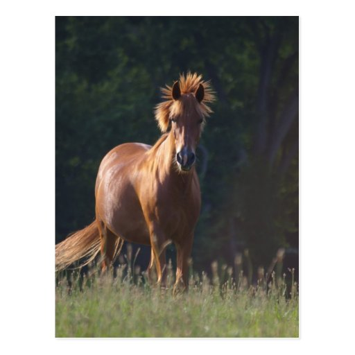 Horse Gazing At You Post Card
