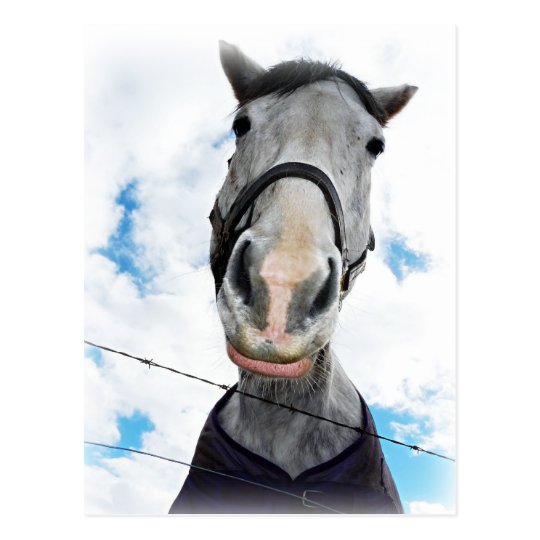 Horse Getting Lippy -  Funny Face Postcard