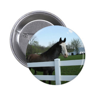 Horse, Good Morning! Pinback Button
