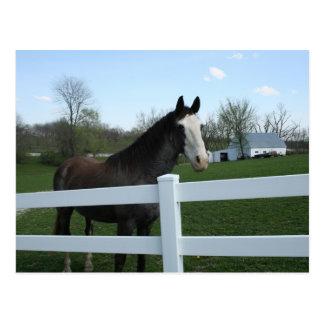 Horse, Good Morning! Postcard