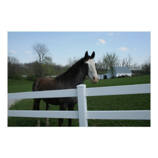 Horse, Good Morning! poster