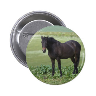 Horse Grazing Button Badge